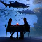 start-aquarium